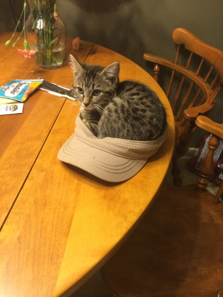 He hasn't quite got the premis of being a cat in a hat, but it's close enough.