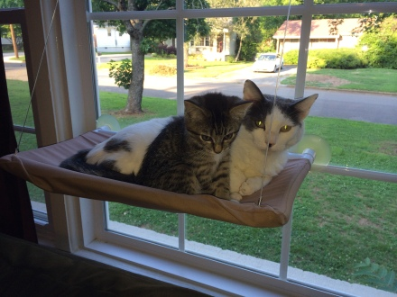 There is just enough room for both kitty cats to fit snugly.
