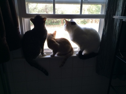 Nothing better than a cat on a window sill, except for three cats on a window sill!