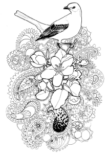 Arkansas State flower and Bird: Apple Blossom and Mockingbird.